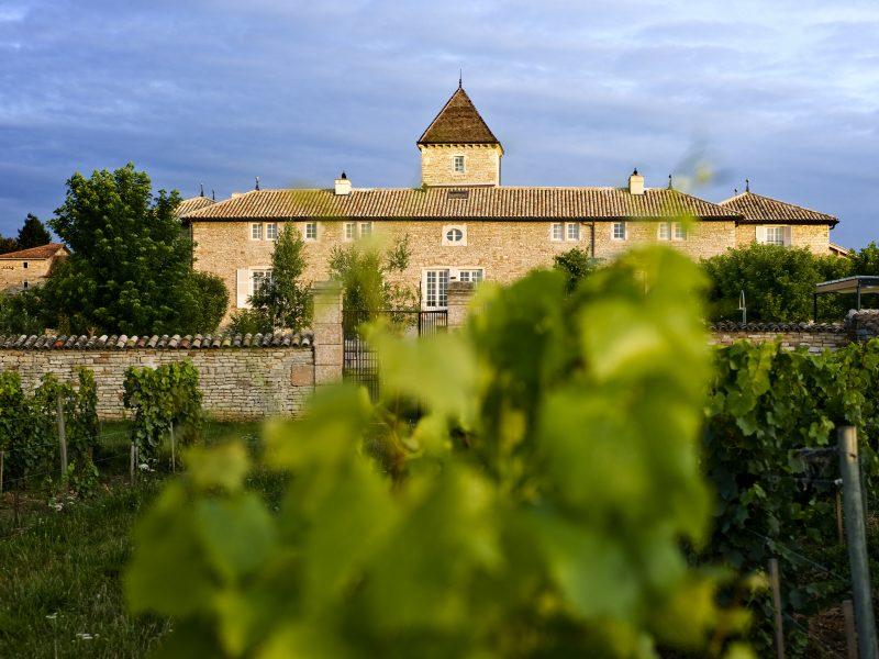 Château de Besseuil : les vignes