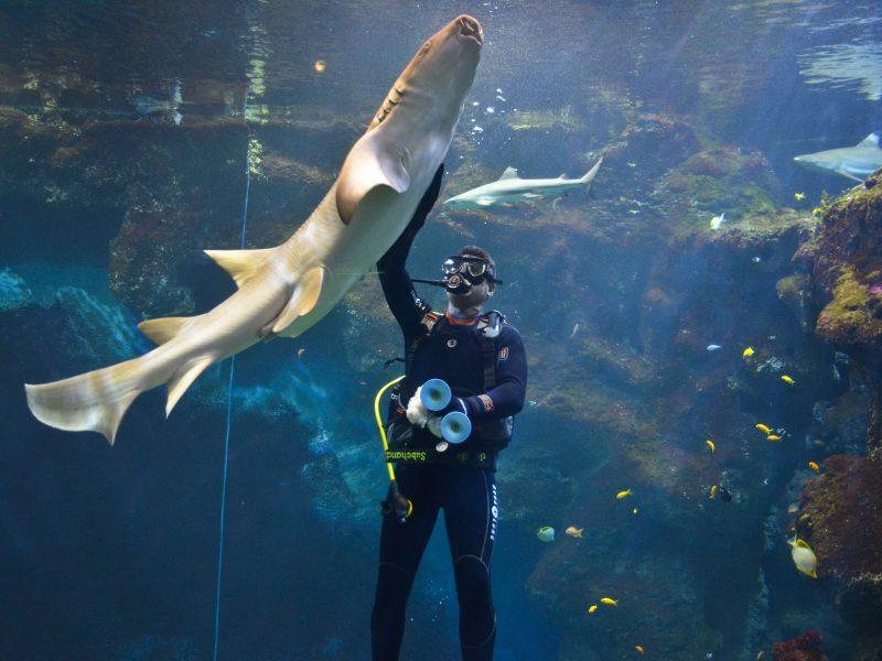 Aquarium de Lyon : plongée