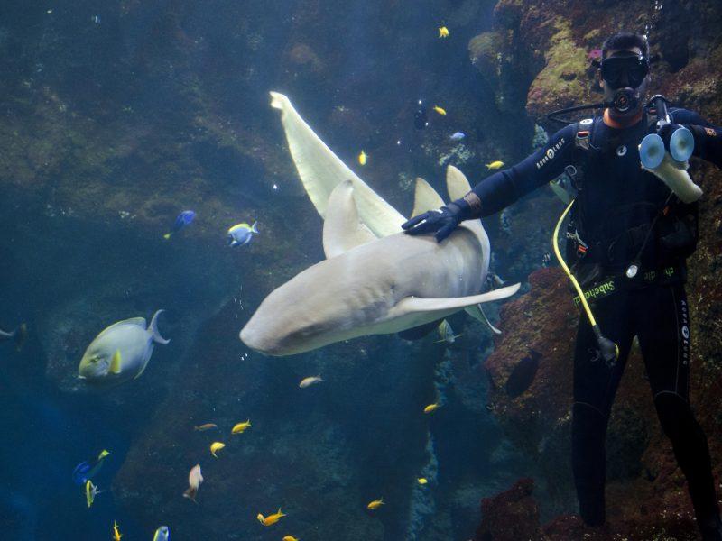 Aquarium de Lyon : requin