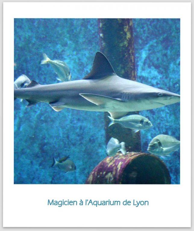 Magicien à l'Aquarium de Lyon