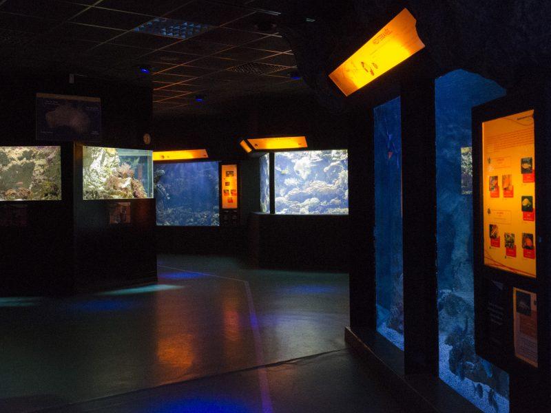 Aquarium de Lyon : les bassins