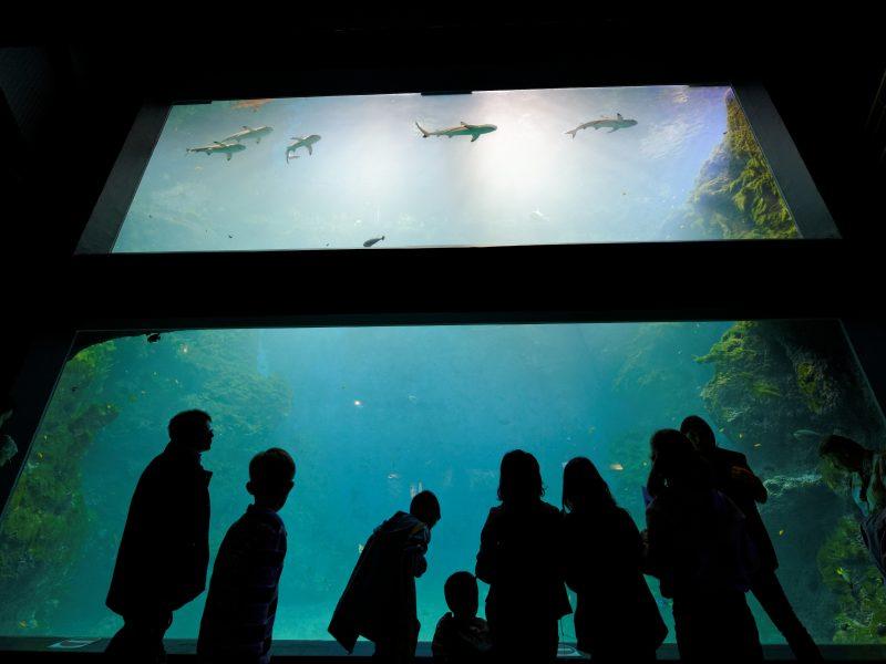 Aquarium de Lyon : public